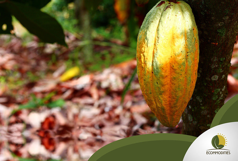 Peru Has the World's Best Cacao, Make Sure To Try It