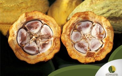 What Are The Differences Between Cocoa Varieties?